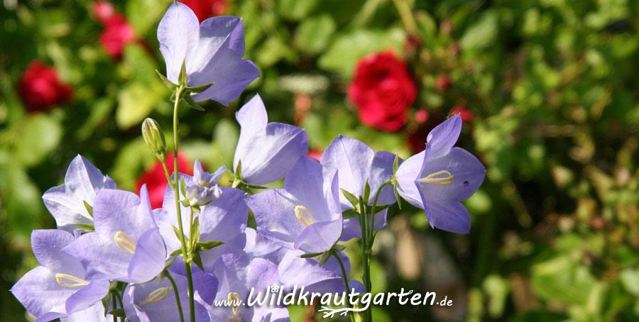 Gartenblicke_4231